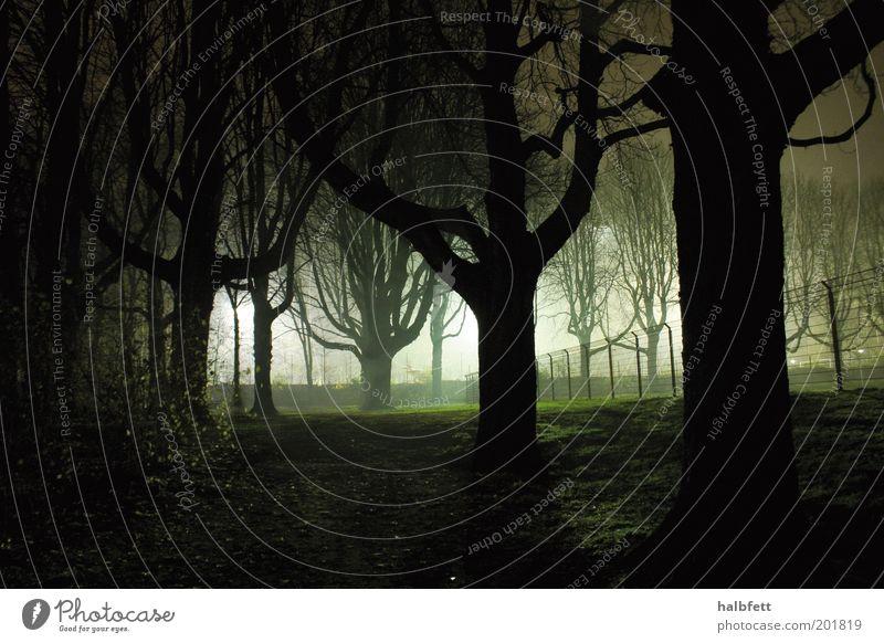 SIE SIND DA. weiß grün Baum Pflanze schwarz Ferne Wald Wiese dunkel Gefühle Stimmung Park Angst Zeit gefährlich bedrohlich