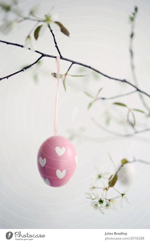 Frohe Ostern! Frühling Zweige u. Äste Dekoration & Verzierung hängen Fröhlichkeit rosa weiß Freude Vorfreude Glaube Freizeit & Hobby Idee Religion & Glaube