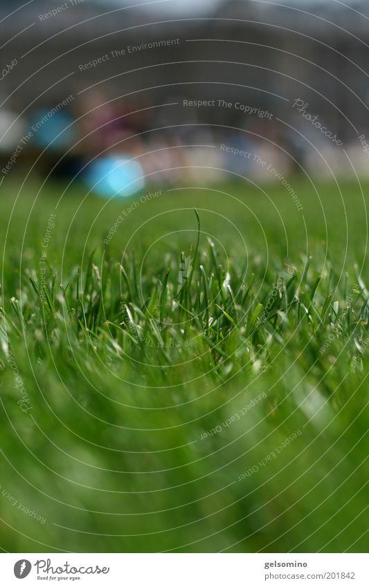 grasgeflüster Natur grün Pflanze Sommer Wiese Gras Park Umwelt frisch ästhetisch nah Unendlichkeit