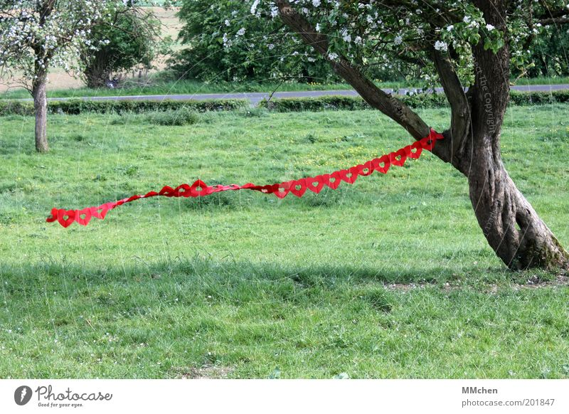 Love is in the Air Natur grün Baum rot Freude Wiese Gefühle Garten Glück Frühling Park Feste & Feiern Feld Herz frei Schönes Wetter