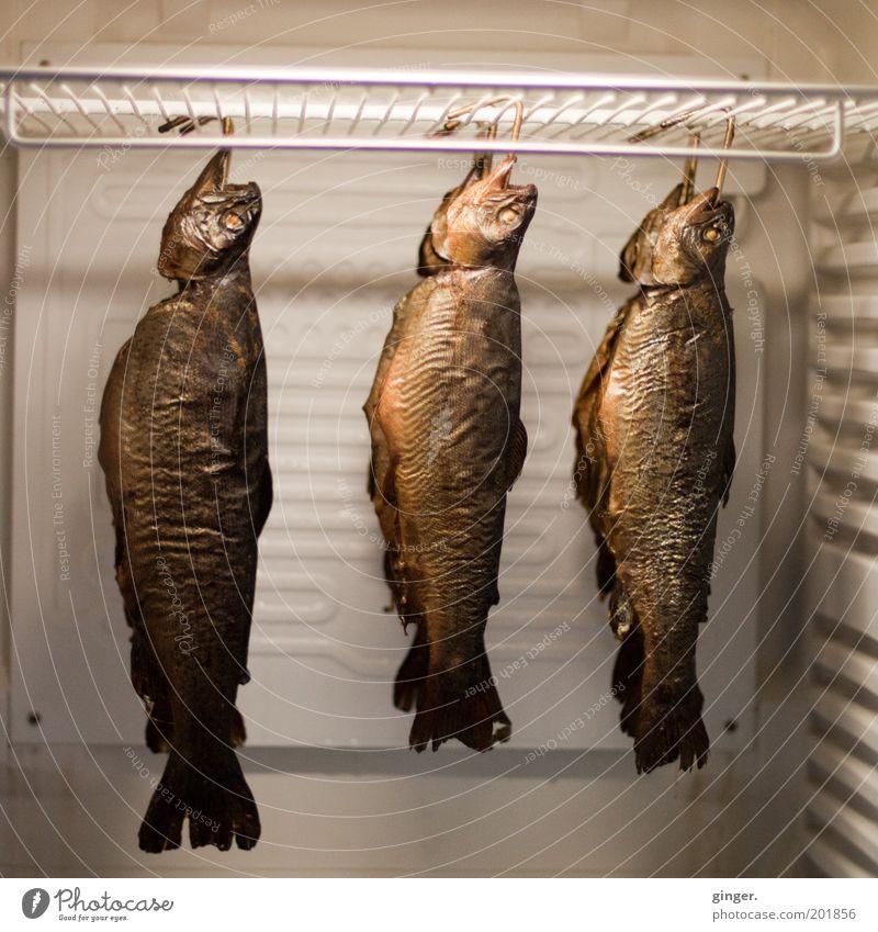 Heute mal Fisch geräuchert! außergewöhnlich Lebensmittel mehrere frisch Ernährung hängen seltsam kühlen Vorrat aufbewahren Kühlschrank konservieren hängend