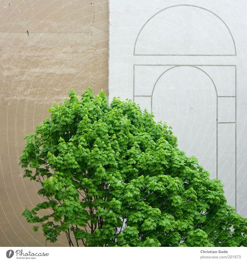 Berliner Mauer Stadt grün Baum Blatt Wand Architektur Gebäude Mauer grau Stein braun Linie Fassade Park Aussicht Platz