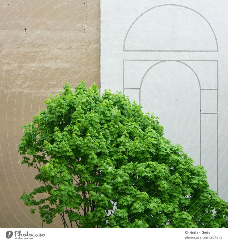 Berliner Mauer Stadt Menschenleer Park Platz Bauwerk Gebäude Architektur Wand Fassade grau grün Buche Baum Baumkrone Blatt Beton Betonwand Hinterhof Bogen braun