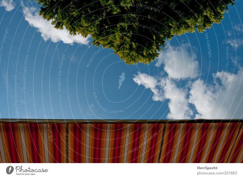 Liegestuhlperspektive Himmel weiß Baum grün blau Sommer Wolken Frühling Garten Freizeit & Hobby gestreift sommerlich Wetterschutz Markise