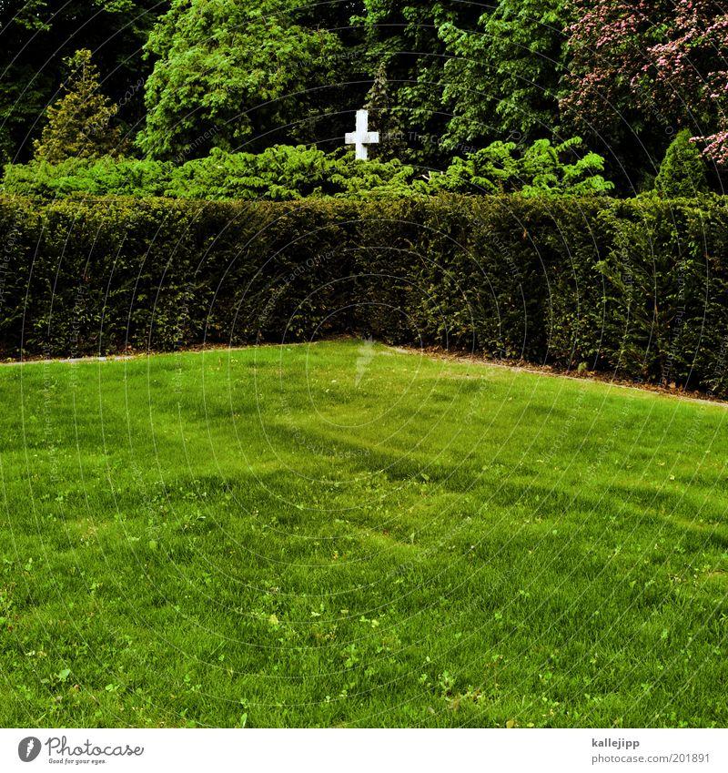 garten eden Umwelt Natur Frühling Pflanze Baum Sträucher Grünpflanze Park Wiese Wald Zeichen Kreuz nachhaltig grün Mitgefühl Güte Menschlichkeit trösten ruhig