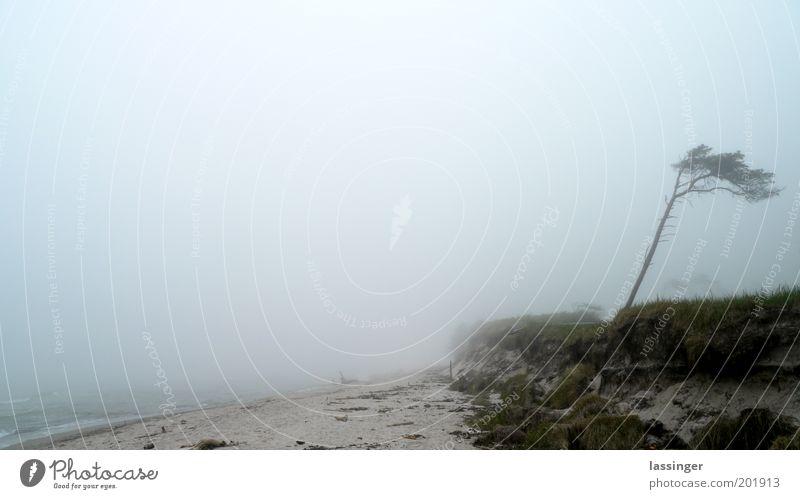 Weststrand Strand ruhig Landschaft Küste unheimlich Morgennebel Nebelbank Nebelmeer Nebelwand Nebelstimmung