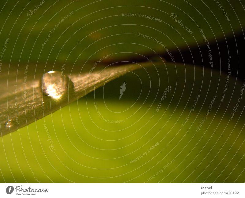 Tropfen auf Tulpenblatt_5 Blatt grün Licht Unschärfe Makroaufnahme Nahaufnahme Wassertropfen Schatten Kontrast drop raindrop leaf light shadow blurred