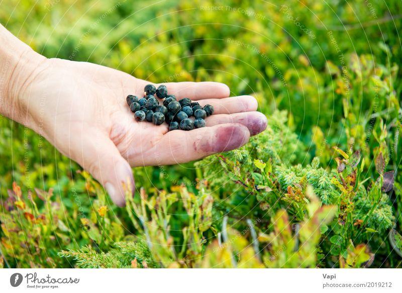 Hand voll von wilden Beeren Frau Natur Pflanze blau Sommer Farbe grün Gesunde Ernährung Blatt Wald schwarz Erwachsene Essen gelb Wiese