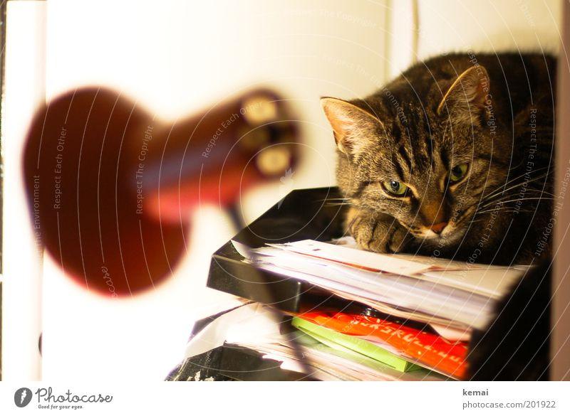 Papiertiger Tier Haustier Katze Tiergesicht Fell Pfote Auge 1 Lampe Schreibtischlampe Ablage liegen loyal Tierliebe Blick Tagtraum gestreift Erholung