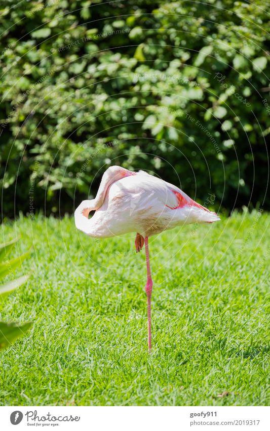 Auf einem Bein!!! Umwelt Natur Sonne Sonnenlicht Frühling Sommer Schönes Wetter Wärme Gras Sträucher Grünpflanze Park Wiese Küste Tier Wildtier Vogel