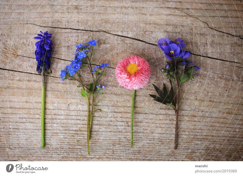 Freunde im Frühling Natur Pflanze Blume Blatt Blüte Grünpflanze Garten Wiese Stimmung Holz Frühlingsblume Muttertag Vergißmeinnicht Gänseblümchen Hyazinthe 4