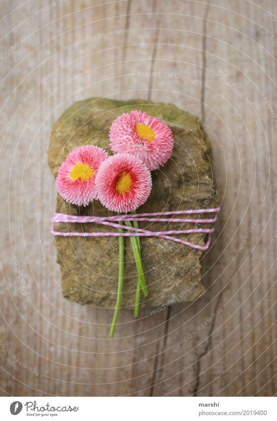 für dich Natur Pflanze Blume Gefühle Stimmung Freundschaft Zusammensein Verliebtheit Muttertag Valentinstag Frühling Stein Dekoration & Verzierung Verpackung