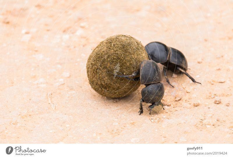 Kegelfreunde!!! Natur Sommer Tier Wärme Umwelt Frühling außergewöhnlich Sand Feld dreckig Erde Tierpaar Wildtier laufen Schönes Wetter Tiergruppe