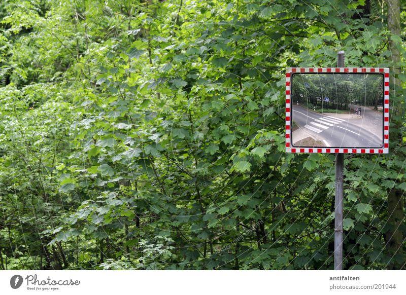 Wir im Wald im Wald Natur Frühling Sommer Pflanze Baum Sträucher Blatt Park Verkehr Straße Straßenkreuzung Wegkreuzung Verkehrszeichen Verkehrsschild