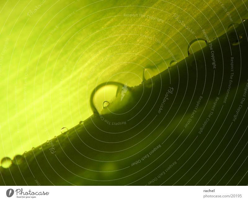 Tropfen auf Tulpenblatt_2 Blatt grün Licht Unschärfe Makroaufnahme Nahaufnahme Wassertropfen Schatten Kontrast drop raindrop leaf light shadow blurred Blattgrün