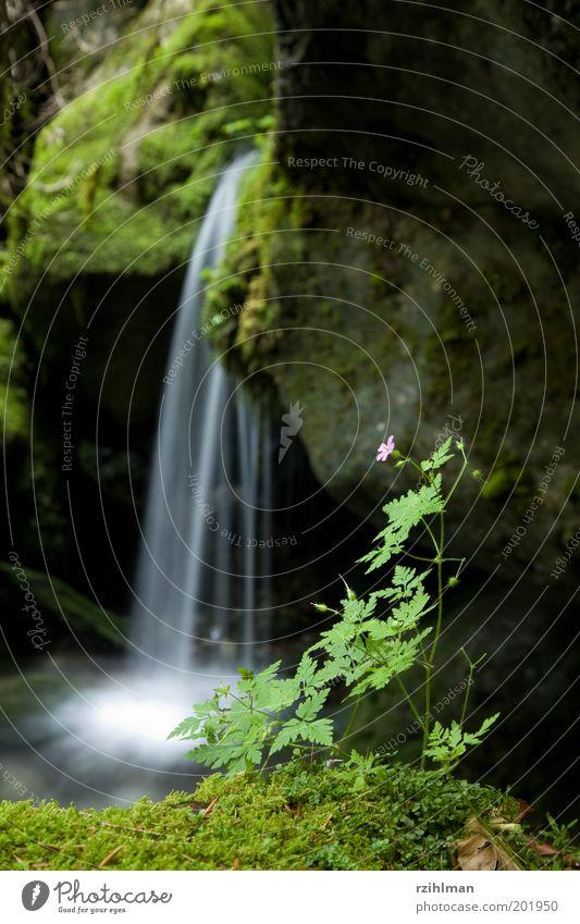 Kleiner Wasserfall Erholung Freizeit & Hobby Moos Blüte Stein klein nass grün Leistung beschaulich Tiefenschärfe Vordergrund fließen Außenaufnahme Tag