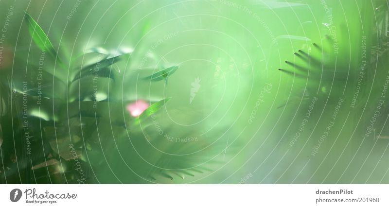 Traumgarten grün schön Pflanze Gefühle Nebel Urwald exotisch Unschärfe verblüht Gewächshaus