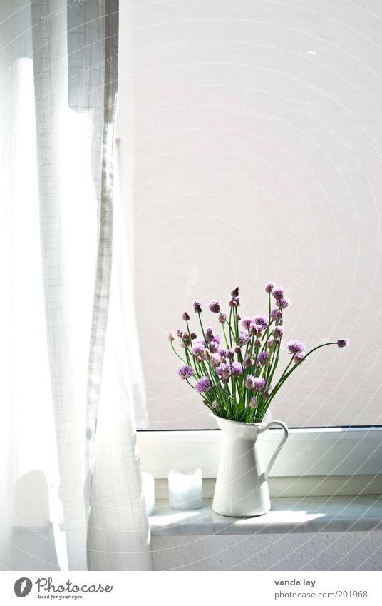 Neulich am Fenster Lifestyle Stil Wohnung Dekoration & Verzierung Frühling Sommer Pflanze schön Schnittlauch Kräuter & Gewürze Krug Vase Gardine Vorhang Kerze