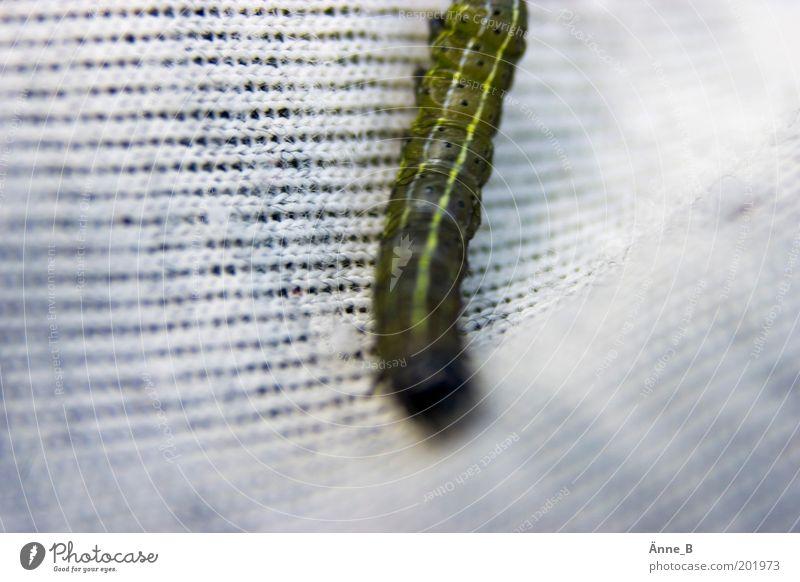 Es kreucht und fleucht weiß grün Tier gelb Geschwindigkeit Stoff niedlich Insekt krabbeln Tuch Raupe gefräßig