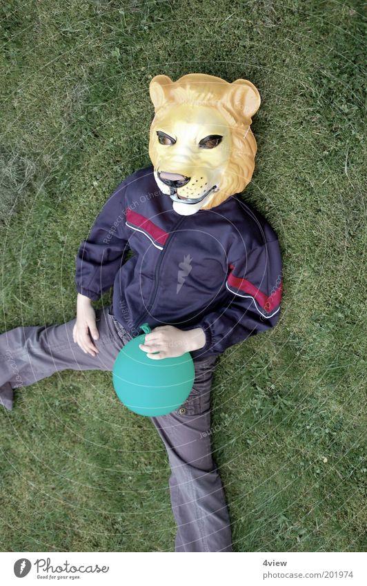 Löwe liegt lang Freude Spielen Garten Wildtier liegen Fröhlichkeit einzigartig Kindheit Farbfoto Außenaufnahme Vogelperspektive verkleiden Maske Kostüm