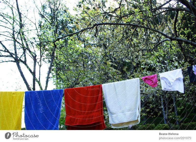 schnell frisch gemacht! Natur Baum blau rot gelb Garten Luft Zufriedenheit Umwelt ästhetisch Sauberkeit Ast Reinigen Duft Schönes Wetter