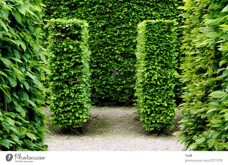 Doppel.T Natur schön Pflanze Blatt Umwelt Wiese Frühling Garten Park ästhetisch planen Sauberkeit Schönes Wetter Inspiration Irrgarten Hecke