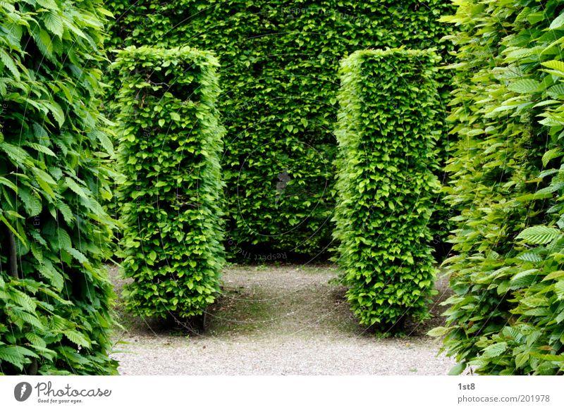 Doppel.T Umwelt Natur Pflanze Frühling Schönes Wetter Blatt Grünpflanze Garten Park Wiese Menschenleer ästhetisch schön Sauberkeit gewissenhaft diszipliniert