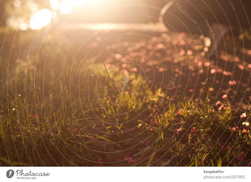 Fototour Fuß 1 Mensch Landschaft Sonne Sonnenaufgang Sonnenuntergang Sonnenlicht Frühling Schönes Wetter Wärme Pflanze Gras Wiese Hose Jeanshose Schuhe träumen