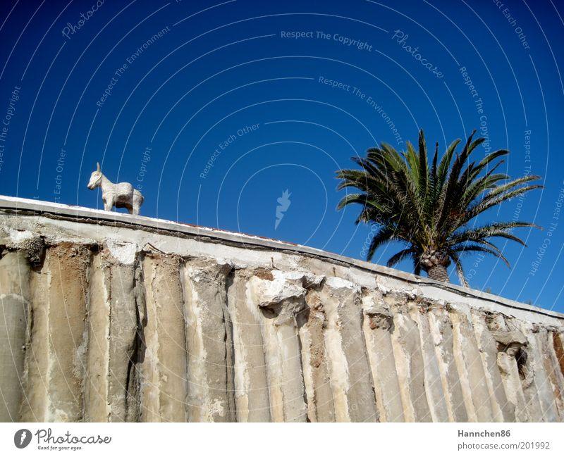 Dem Himmel so nah Tier Esel 1 Stein Sand Beton Linie Blick träumen ästhetisch frei niedlich schön blau grau grün weiß Glück Fröhlichkeit Zufriedenheit