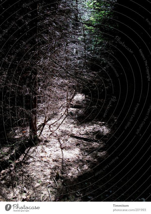 Oden-Wald im Aufbruch Natur Baum grün Pflanze ruhig Wald dunkel Gefühle Landschaft Luft Umwelt Erde Wachstum Hügel eng Geborgenheit