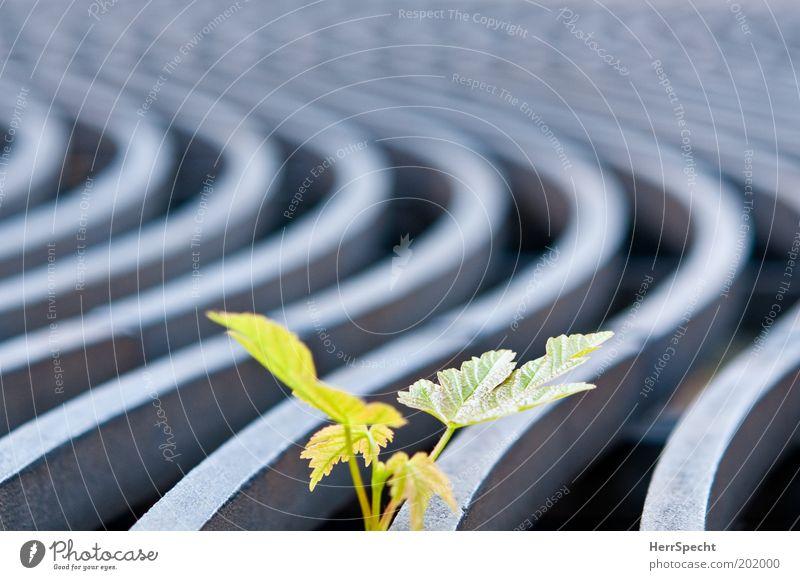 Kämpfernatur Natur grün Baum Pflanze Leben grau Metall Kraft natürlich Erfolg Wachstum Hoffnung frech kämpfen Gitter Muster