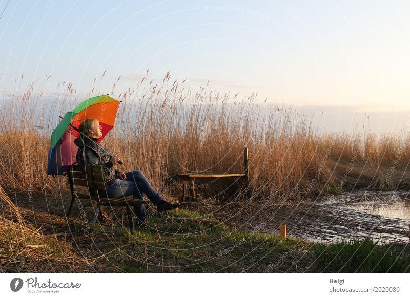Frau genießt mit einem bunten Schirm die Abendsonne auf einer Bank im Schilf am See Mensch feminin Erwachsene Weiblicher Senior 1 60 und älter Umwelt Natur