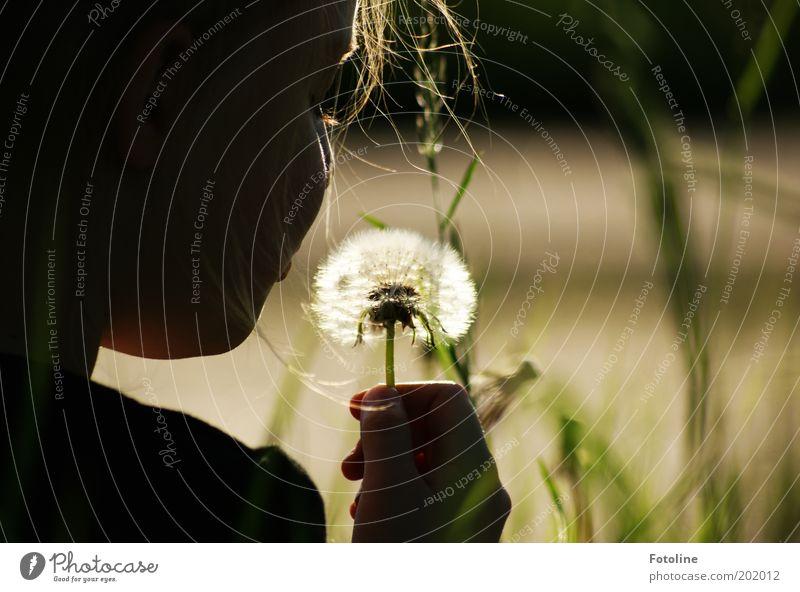 Noch eine Pusteblume... Mensch Mädchen Kindheit Kopf Haare & Frisuren Hand Finger Umwelt Natur Pflanze Sommer Wärme Blume hell Löwenzahn Farbfoto mehrfarbig