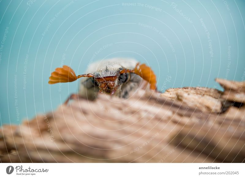 Kiekst de mal.. Natur Baum blau Auge Tier Frühling Holz braun klein sitzen Tiergesicht Flügel Insekt Wildtier niedlich Baumstamm