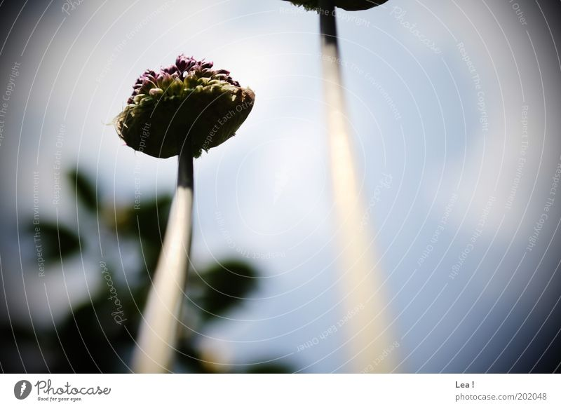 Froschperspektive Blume Leben Wachstum Blühend Stengel Duft aufwärts Blütenknospen Blütenstiel Licht himmelwärts