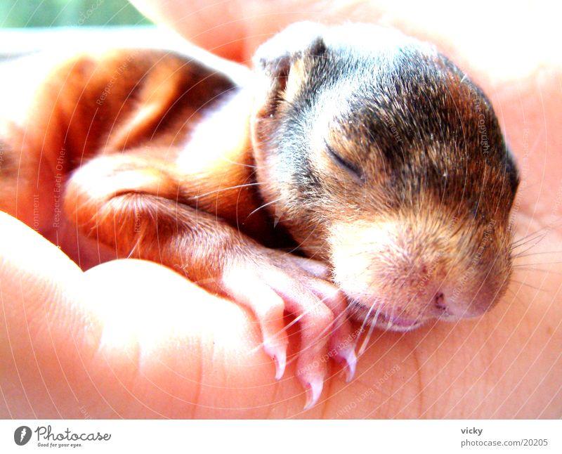 Hagen Eichhörnchen Tier Nagetiere Krallen Nest Eichhörnchenbaby Tierjunges Steinblock