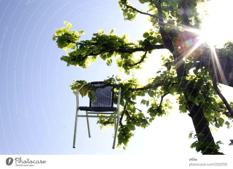 Hochsitz Umwelt Natur Himmel Wolkenloser Himmel Sonne Sonnenlicht Sommer Schönes Wetter Baum Stuhl Holz Metall außergewöhnlich Farbfoto Außenaufnahme