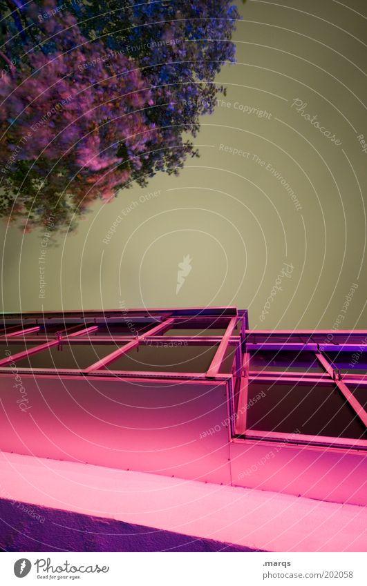 Freudenhaus Baum Haus Farbe dunkel Fenster Gebäude rosa bedrohlich Häusliches Leben außergewöhnlich leuchten skurril Nachtleben Bordell