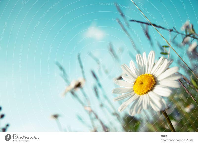 Blumenwiese Glück Leben Wohlgefühl Duft Sommer Sommerurlaub Garten Umwelt Natur Pflanze Himmel Frühling Schönes Wetter Gras Blüte Wiese Blühend Freundlichkeit