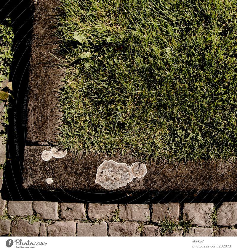 Ecke grün Wiese Gras nah Kopfsteinpflaster Symmetrie eckig Detailaufnahme Begrenzung