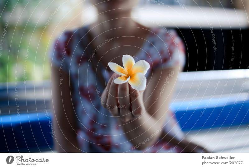 Lelavadee Natur Hand weiß Pflanze feminin Blüte Frühling gold ästhetisch natürlich festhalten Blühend Duft Geruch exotisch zeigen