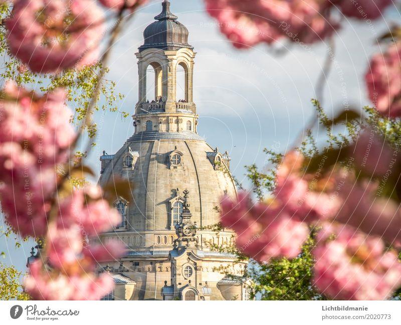 Frauenkirche Dresden im Frühling Mensch Pflanze Stadt Baum Wolken Architektur Blüte Gebäude Tourismus Kirche Kultur Schönes Wetter Blühend historisch Turm