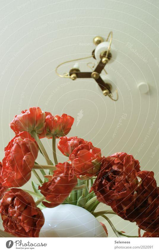 Tulpen Stil Design Wohnung Dekoration & Verzierung Raum Blume Blüte Blühend hängen ästhetisch frisch rot weiß Duft Lampe Beleuchtung Glühbirne Vase Farbfoto