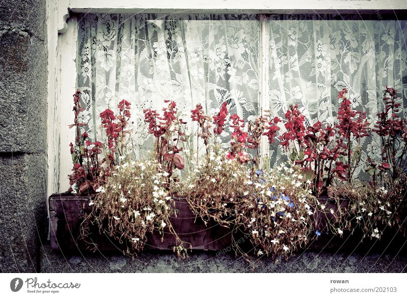 blumenkasten Mauer Wand Fassade Fenster alt Gardine Vorhang Blume Blumenkasten Dekoration & Verzierung Pflanze Muster altmodisch retro wohnlich Häusliches Leben