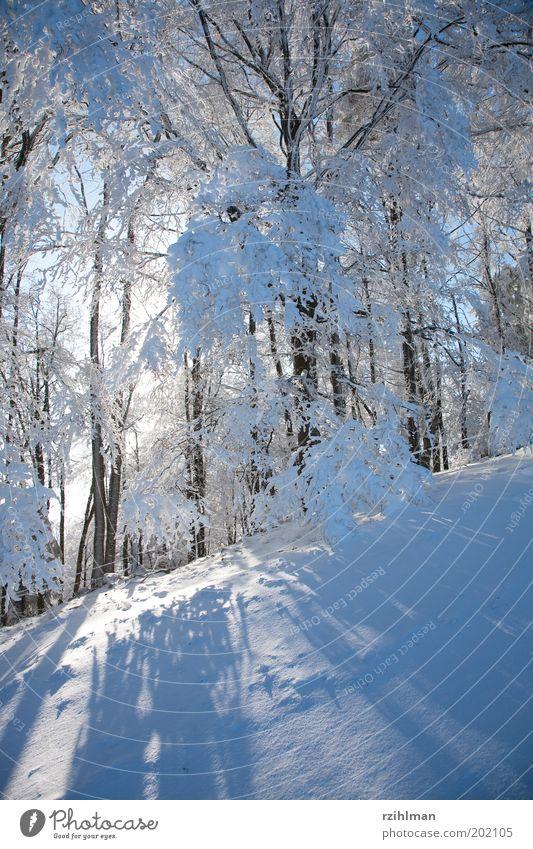 Morgensonne Natur weiß Baum Sonne Winter ruhig Wald kalt Schnee träumen Landschaft Frost gefroren Jahreszeiten Schneelandschaft Raureif