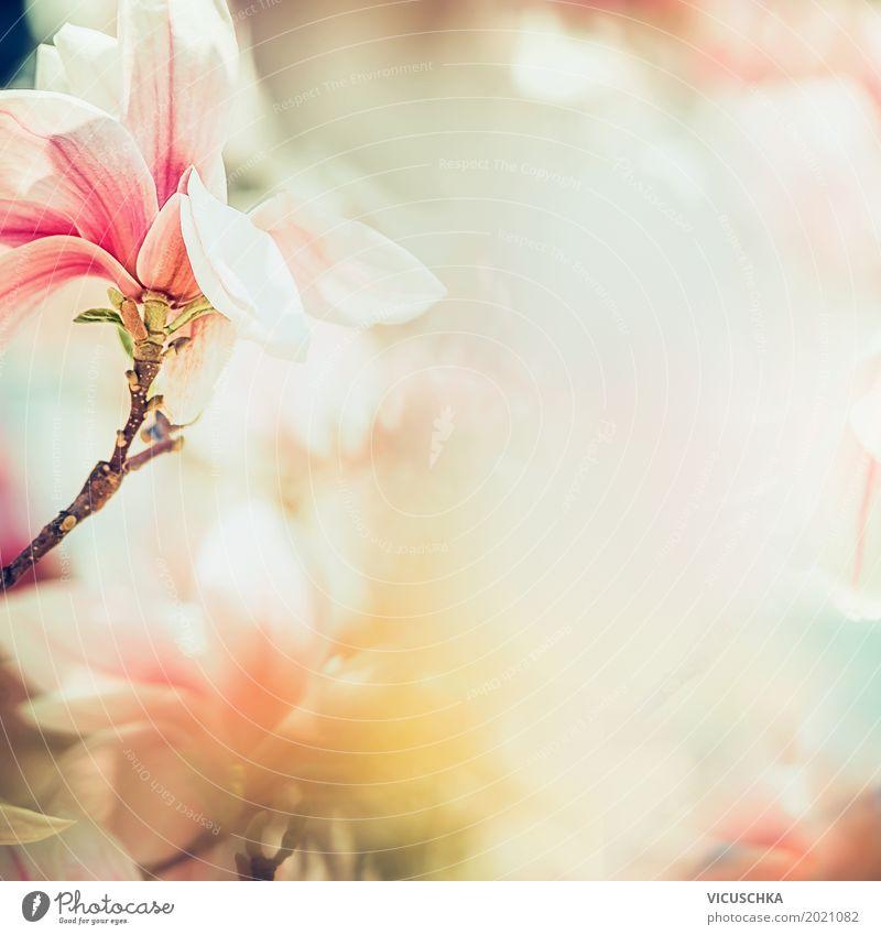 Wunderschöne Magnolienblüte im Sonnenlicht Design Leben Sommer Garten Natur Pflanze Frühling Schönes Wetter Blume Blatt Blüte Park Blühend weich rosa