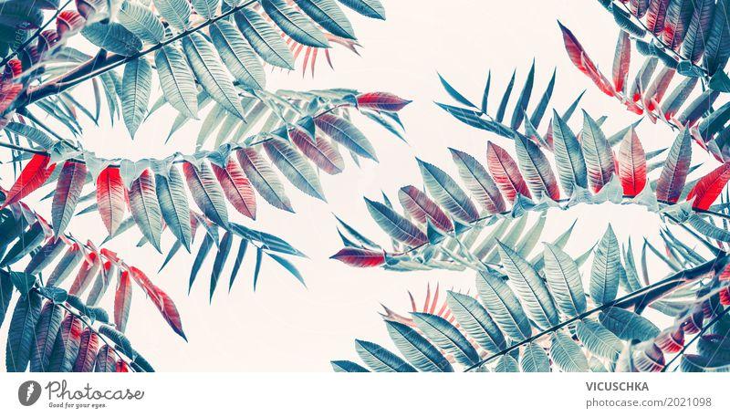 Schöne tropische Blätter Natur Ferien & Urlaub & Reisen Pflanze Sommer Blatt Freude Herbst Frühling Stil Garten Design Park Fahne exotisch Urwald Thailand