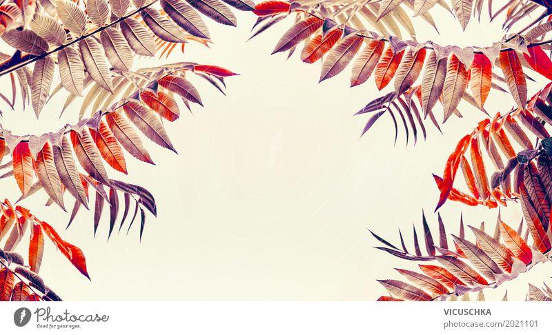 Herbst Laub Design Garten Natur Pflanze Blatt Park gelb Hintergrundbild November September Oktober Laubbaum Farbfoto Außenaufnahme Textfreiraum Mitte