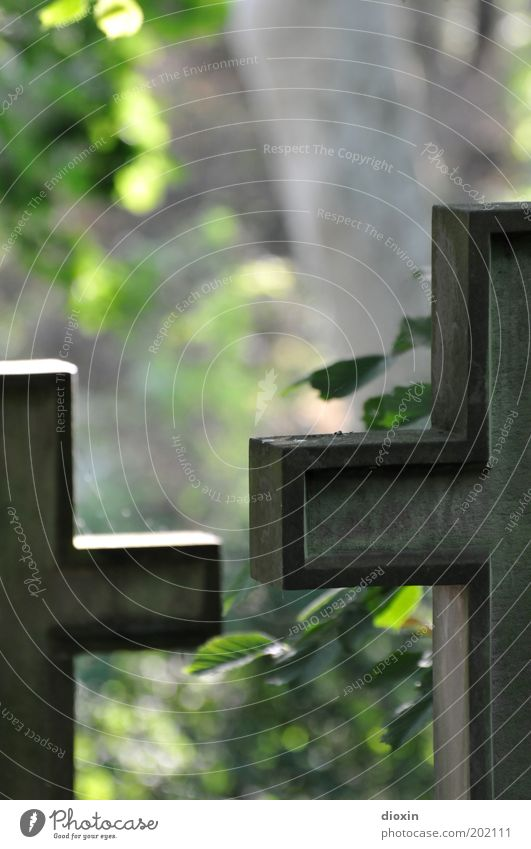 Vergänglichkeit #2 alt Baum ruhig Tod Stein Zeichen Christliches Kreuz Religion & Glaube Christentum Friedhof Grab Beerdigung erinnern Aktion Pflanze Grabstein