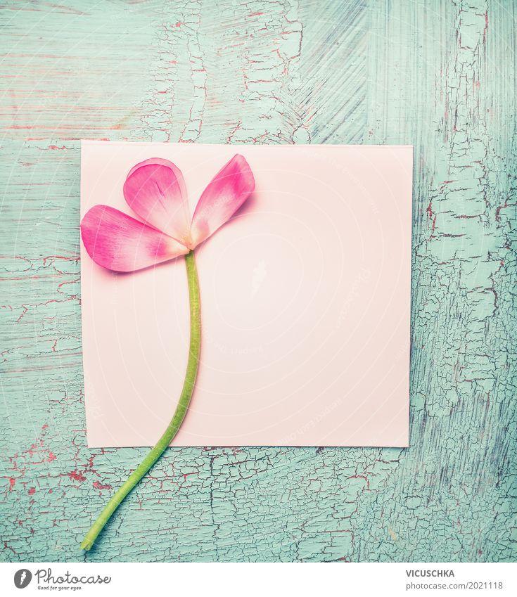 Rosa Blüten auf weiß leere Papier-Karte Stil Design Freude Dekoration & Verzierung Feste & Feiern Valentinstag Muttertag Geburtstag Blume Rose Blatt